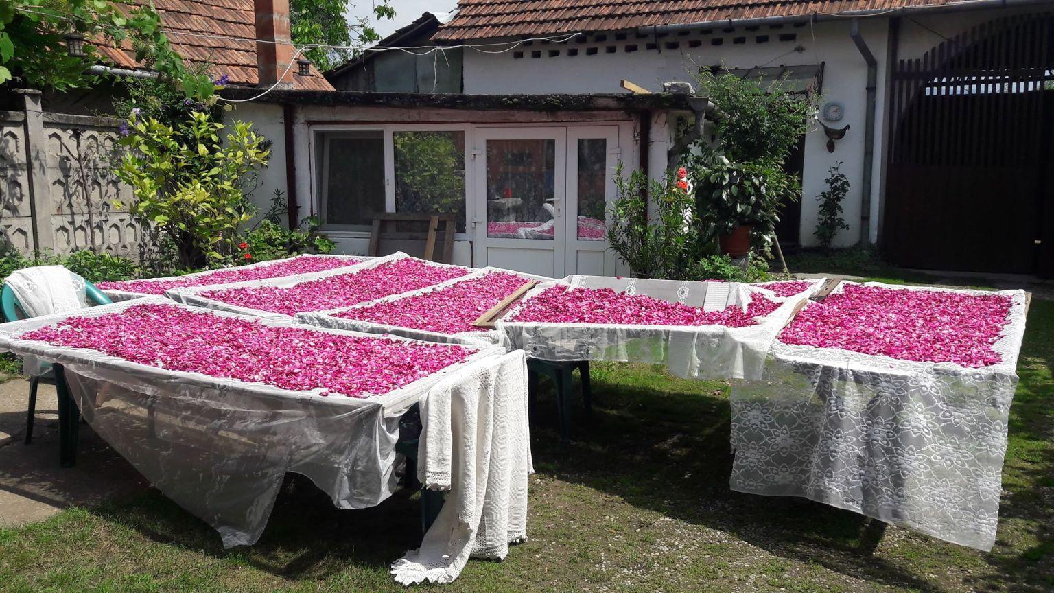 Uleiurile-de-trandafiri-4.jpg